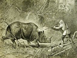 "Short Film ""UNICORN"" - about the extinction of rhinocerous"