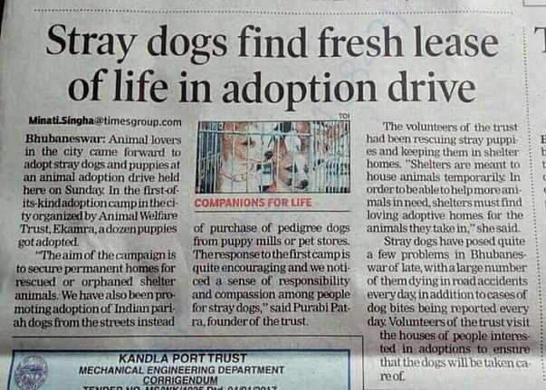 Media coverage on shelter dogs adoption drive