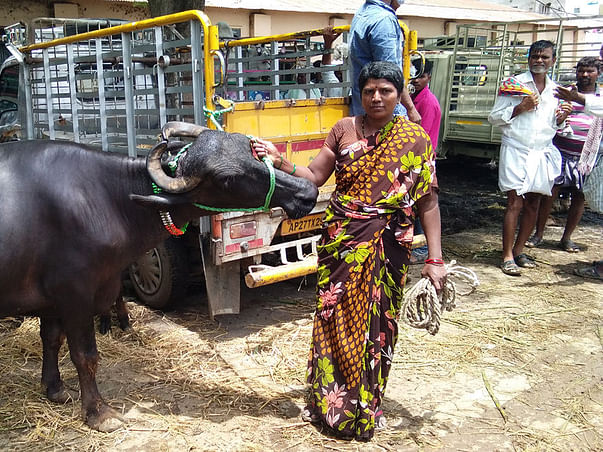 Help A poor working Women Dairy Farmer to buy more Cattles