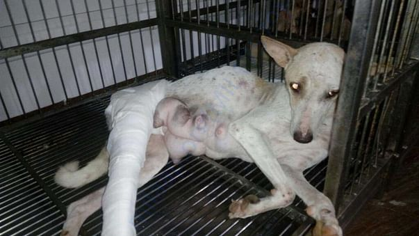 Photo of Whity when she was admitted for treatment few months back.