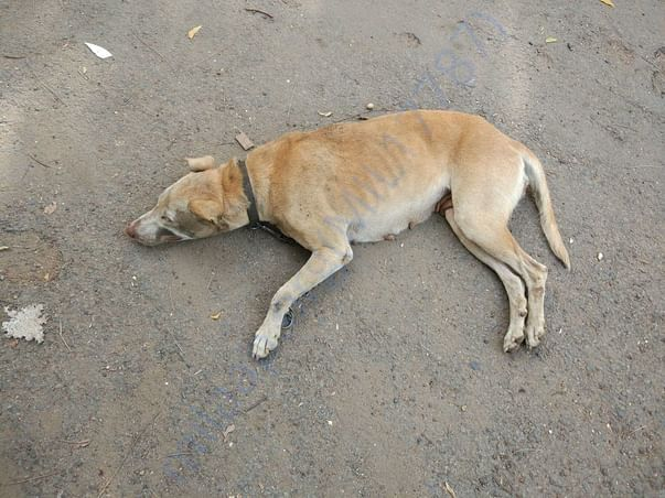 Madam Pic - An abandoned dog who was rescued and sent to foster home