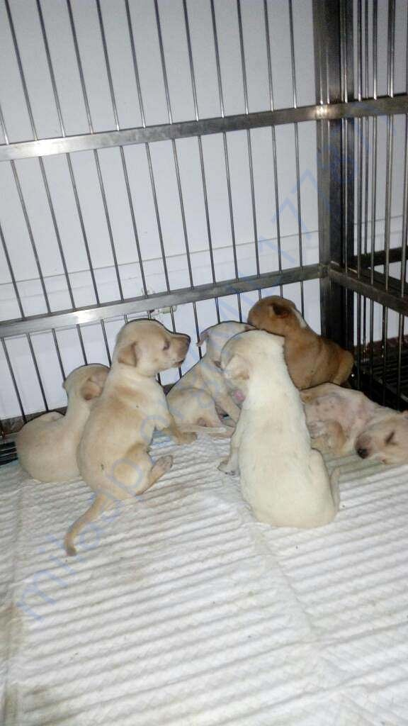 Whity Puppies