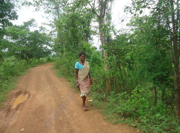 जंगलों में लकडियां ढुुंढती  आदिवासी महिला