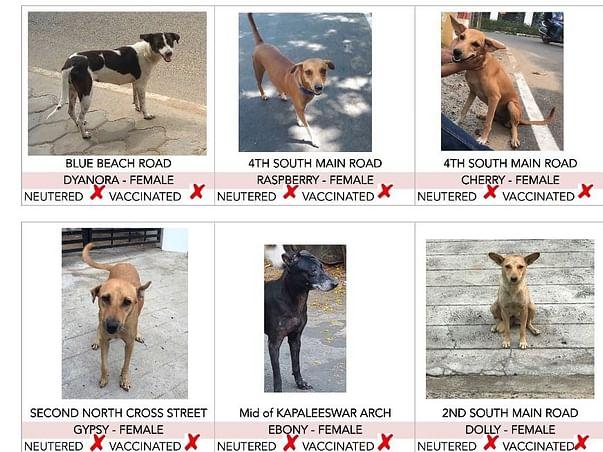 Grp of 7-aim to vaccinate & spay streeties in nagar and protect them
